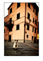 cat in square, orvieto